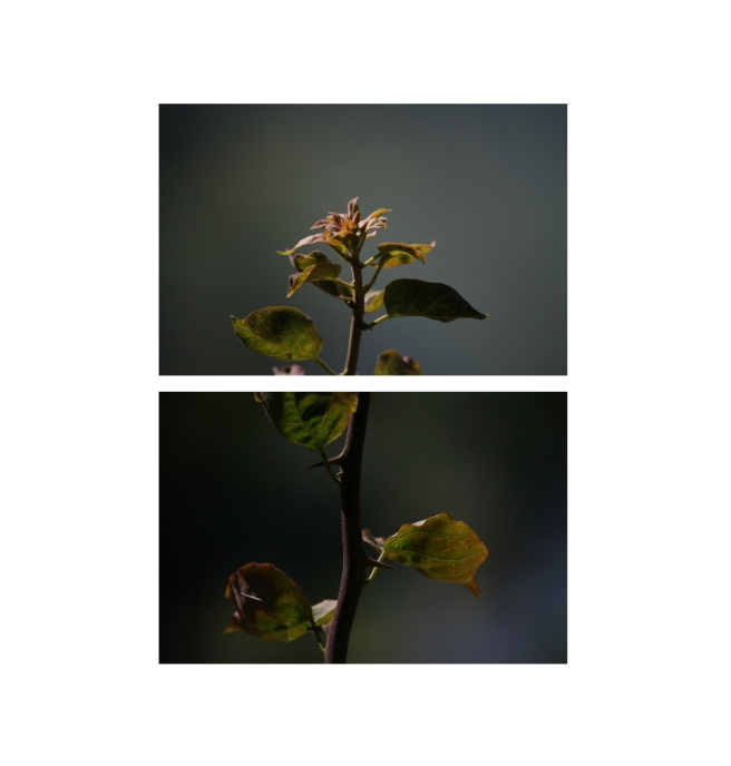 fotografia | em papel fotográfico | 2012 | dimensões variáveis